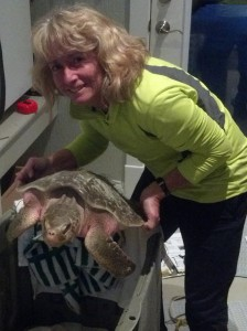 Jody with cold stunned sea turtle