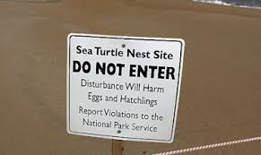 turtle nest site sign
