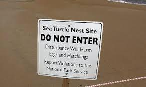turtle nest site sign
