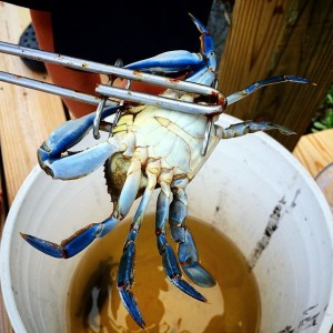 crabbing image