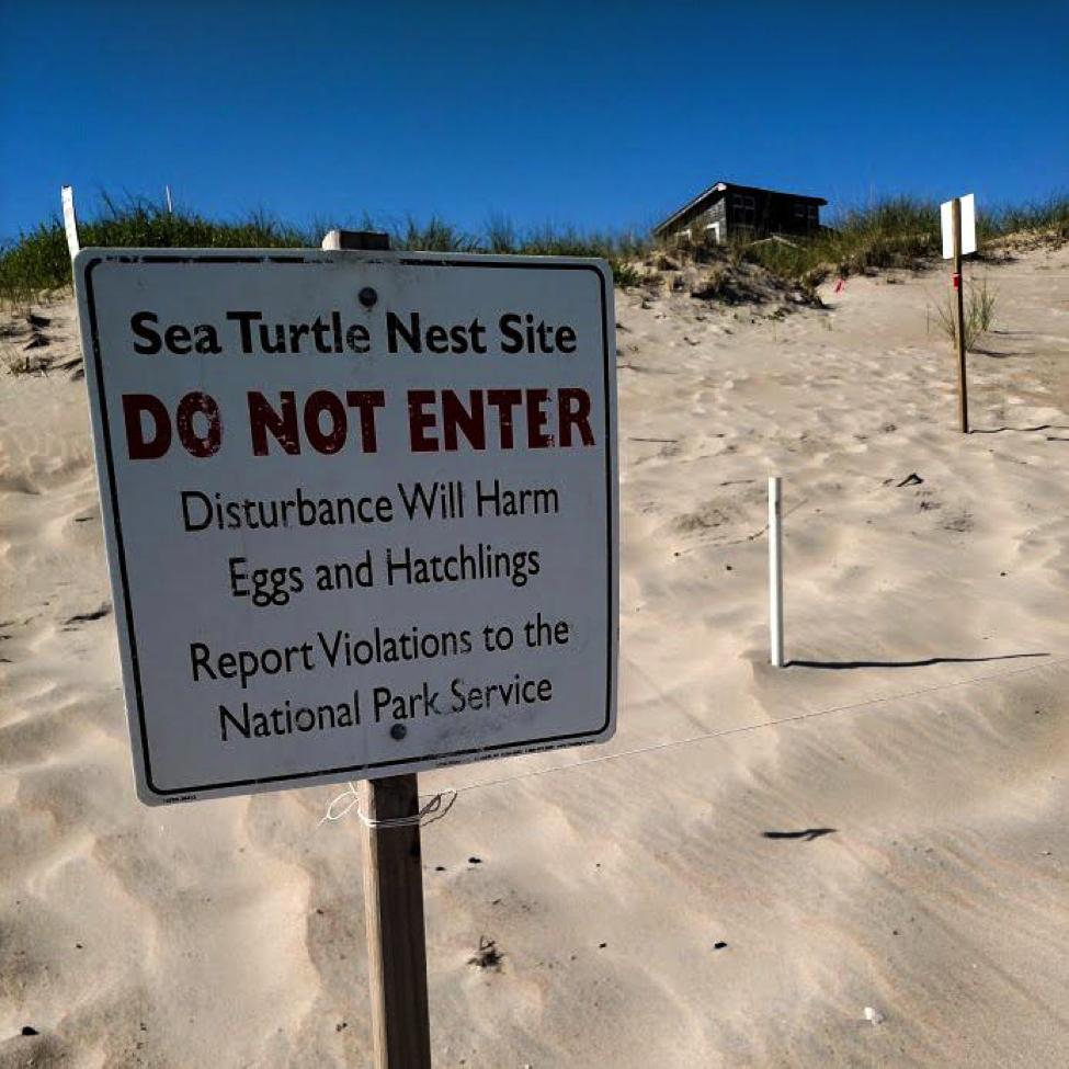 turtle patrol hatteras ocean island center
