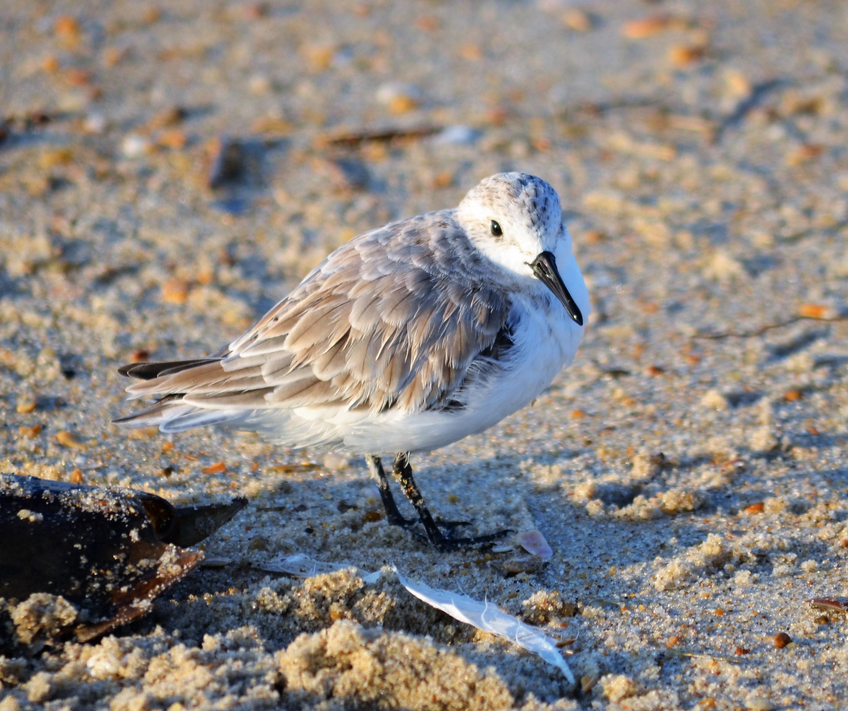 Hatteras Island: Hatteras Kayaking, Sound Access, Crabbing, And Programs